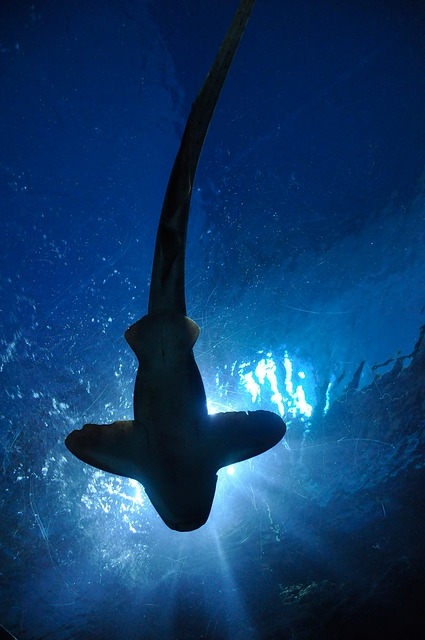 Découvrir l'aquarium de Vannes